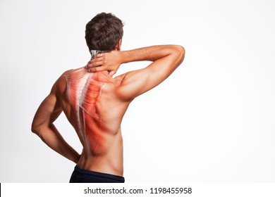 Man's back muscle and body structure. Human body view from behind isolated on white background.