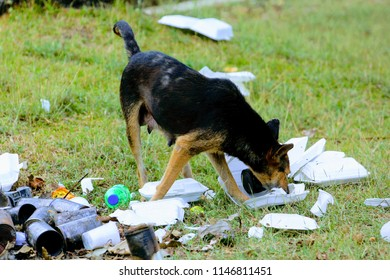 Man's best friend neglected - a dog rummaging through trash for food