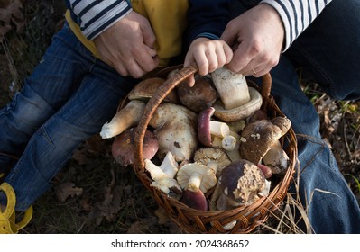 man's and a child's hands are holding a wicker straw basket filled with freshly picked forest mushrooms. Dad and son on an interesting walk picking mushrooms. Family hobby. Selective focus