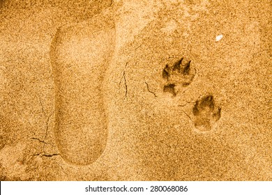 A man's footprints and a dog's footprints in the sand