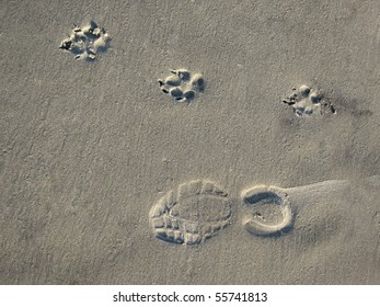 A man's footprints and a dog's footprints in the sand.