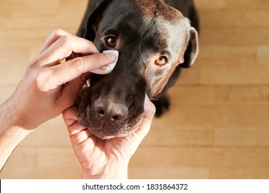 man's hand cleaning his dog's eyes