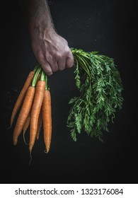 Man's hand holding a bunch of fresh carrot with leaves.