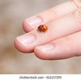 Man's hand with a lady bug crawling on it.