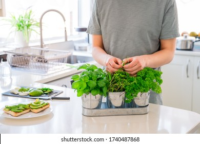 Man's hand picking leaves of greenery during cooking. Home gardening on kitchen. Pots of herbs with basil, parsley and thyme. Home planting and food growing. Sustainable lifestyle, plant-based foods
