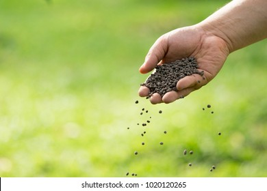 Man's hand is sowing fertilizer. Important steps to take care of plants.