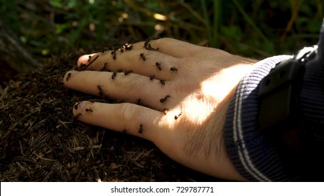 Man's hand with a swarm of ants. Little ants crawling on a man's hand