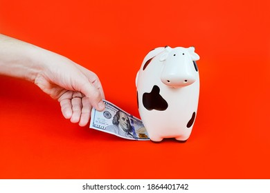 man's hand takes 100 dollar banknote from money box cow. 2021 new year symbol cow and dollar bills on red background.