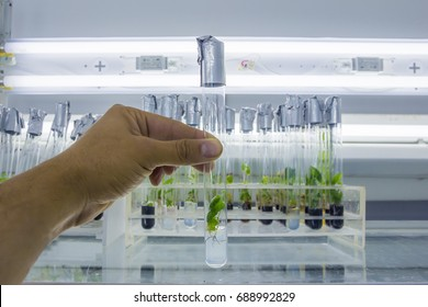 Man's hand with a test tube closed by aluminum foil with in vitro cloned microplant in a nutrient medium on background with stand of test tubes with microplants