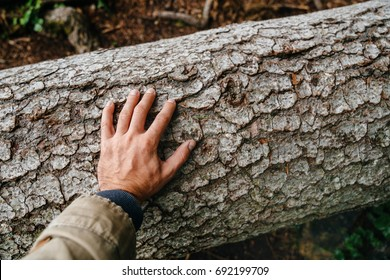 The man's hand touches the bark of a fallen tree. The concept of environmental protection.