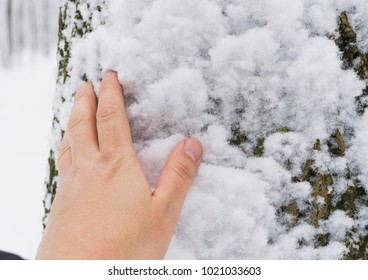 The man's hand touches the snow in the winter forest.