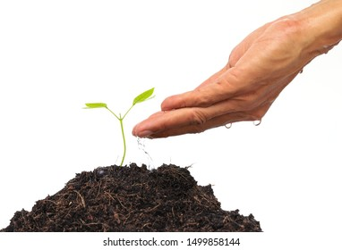 Man's hand is watering a small, new plant with the tip of his finger isolated on white background. Concept of planting trees to protect nature and the environment.
