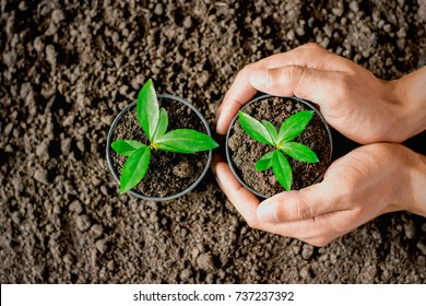Man's hands are planting potted seedlings. Placing the soil to the ground to be planted, ecology concept.