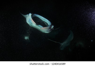 Manta ray in air bubbles at night