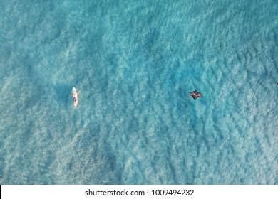 Manta Ray and surfer at Currumbin.