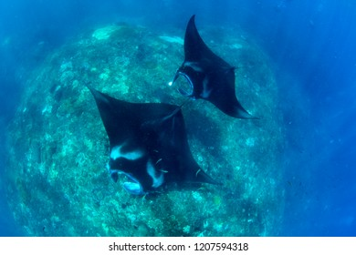 Manta rays in the ocean. Pictures were taken near Bali.