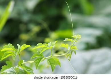 Belalang Sembah Images Stock Photos Vectors Shutterstock