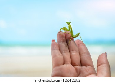 Mantis on hand in sea the beauty of nature