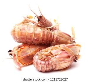 Mantis Shrimp on the white background
