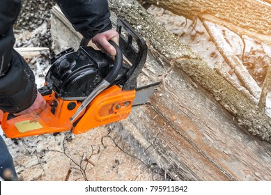 Manual chainsaw. Man hands, saws a tree in the woods in winter at sunset