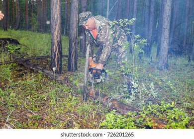 Manufacture of the index of the direction of sanitary felling of wood in the Siberian taiga by a chainsaw.  The forest ranger processes the tree with a chainsaw in the forest.