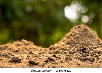 Dung oder Kuhdung für den Anbau und die Landwirtschaft.