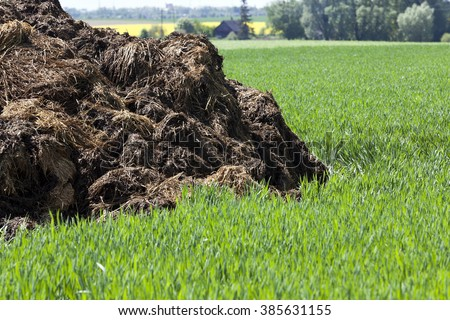 manure, which lies in the field to fertilize crops. Spring. close-up