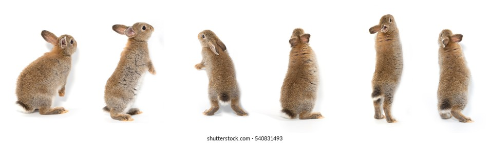 Many actions of stand post baby rabbit adorable brown bunny on white background