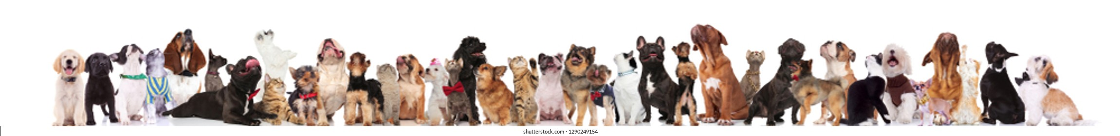 many adorable dogs and cats with bowties and collars look up while standing and sitting on white background