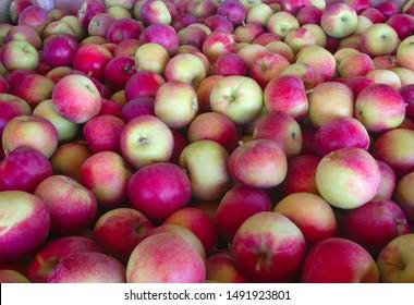 many apples background full frame organic fruits