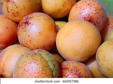 Many apricot