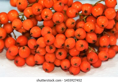 many ashberry fruits in closeup