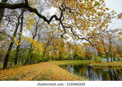Many autumn trees at nature park in Saint Petersburg, Russia.