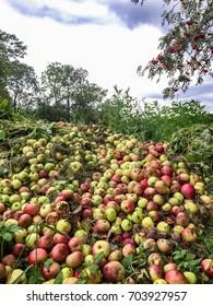 Many bad apples - farm waste in summer