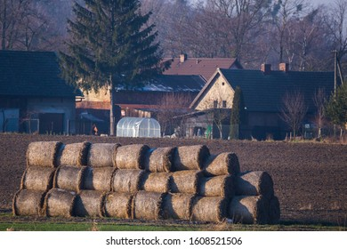 Many bales of straw on a field with buildings behind in the bcakground
