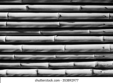 Many of bamboo logs texture