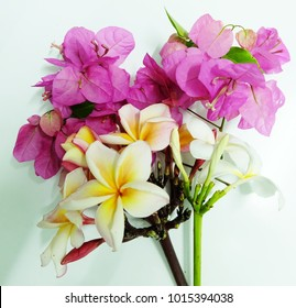 Many beautiful colored flowers on white  background.