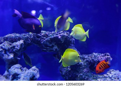 Many beautiful colored yellow fish in the water. Underwater world