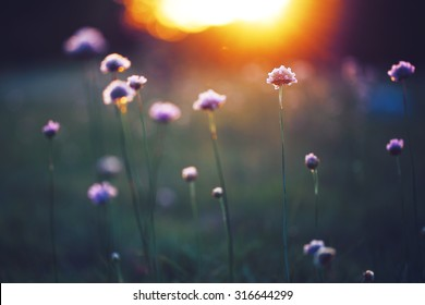 many beautiful meadow wild flowers in field on sunset background. Sunny outdoor bright evening colouful autumn photo