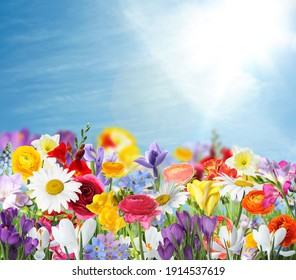 Many beautiful spring flowers outdoors on sunny day