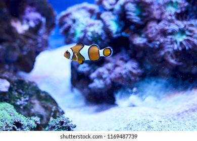 "Solar Powered Dancing /""Swimming/"" Clown Fish in Underwater Scene"