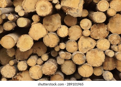 Many Big Old Pine Wood logs In Large Woodpile Background Texture