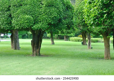 Many big trees in garden for rest and relaxing