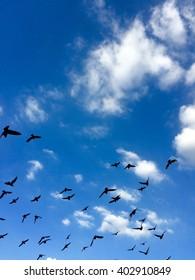 Many birds fly