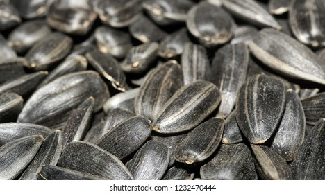 Many black sunflower seeds