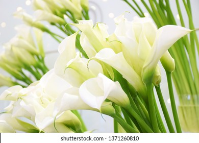 Many blooming white callas flowers close up with copy space. Group of Calla lilies close up, light blooming wedding background. Floral pattern. Abstract background.