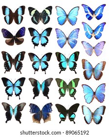 Many blue butterflies isolated on a white background