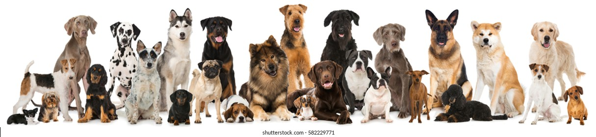Many breed dogs isolated