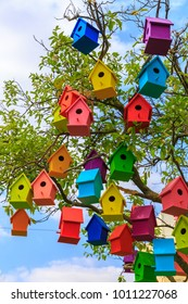 Many bright colored birdhouses on a mandarin tree at city