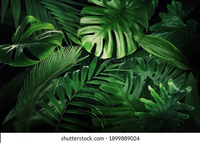 Many bright green tropical leaves as background